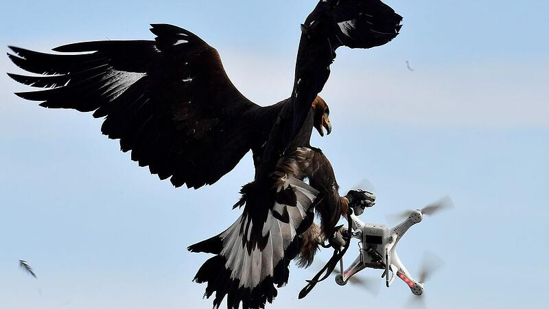 COUNTER DRONE, BIRDS OF PREY